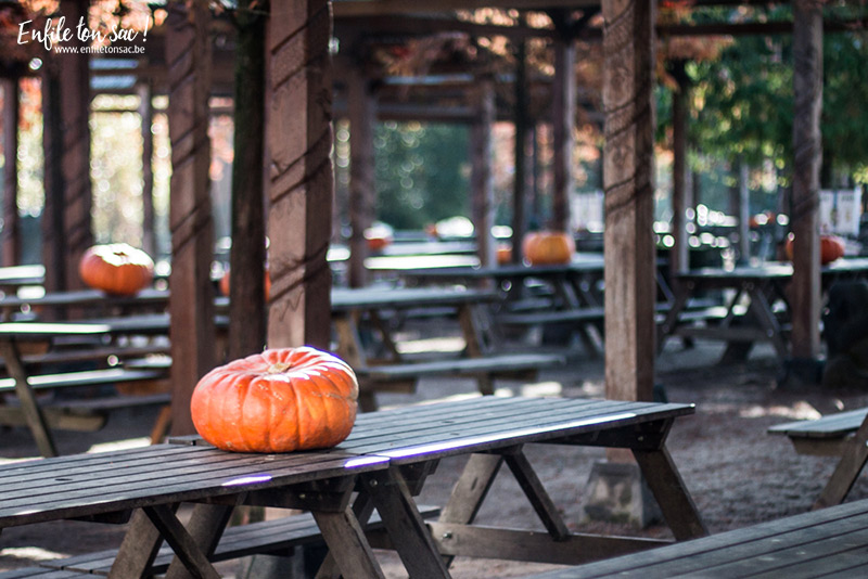 pairi daiza halloween 2015 2 Halloween à Pairi Daiza   dates et informations 2016