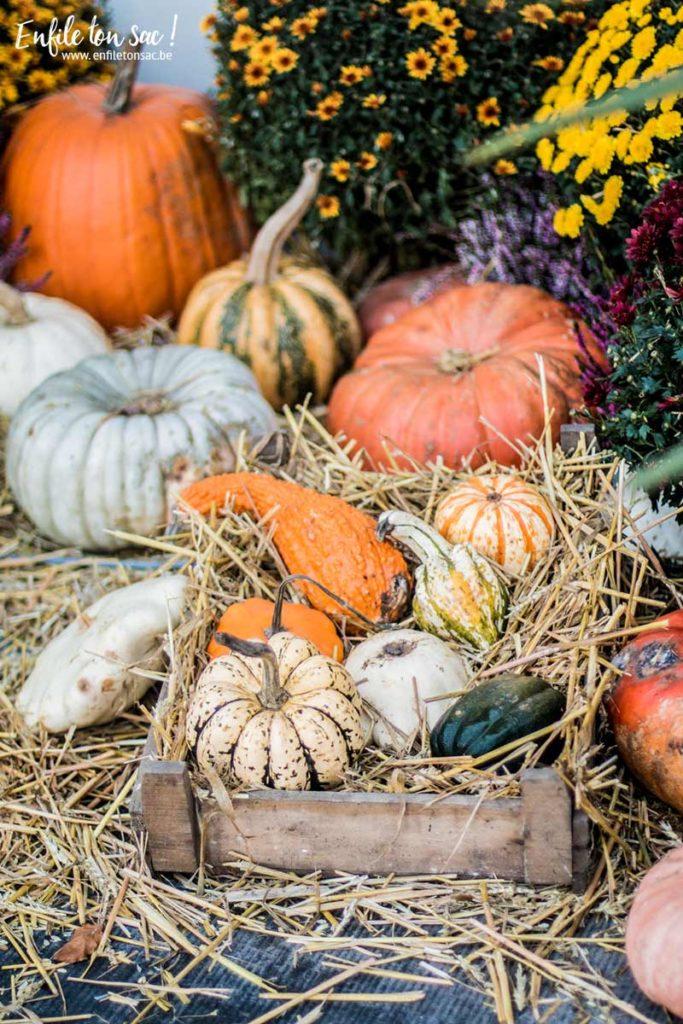 pairi daiza halloween 2015 683x1024 Halloween à Pairi Daiza   dates et informations 2016