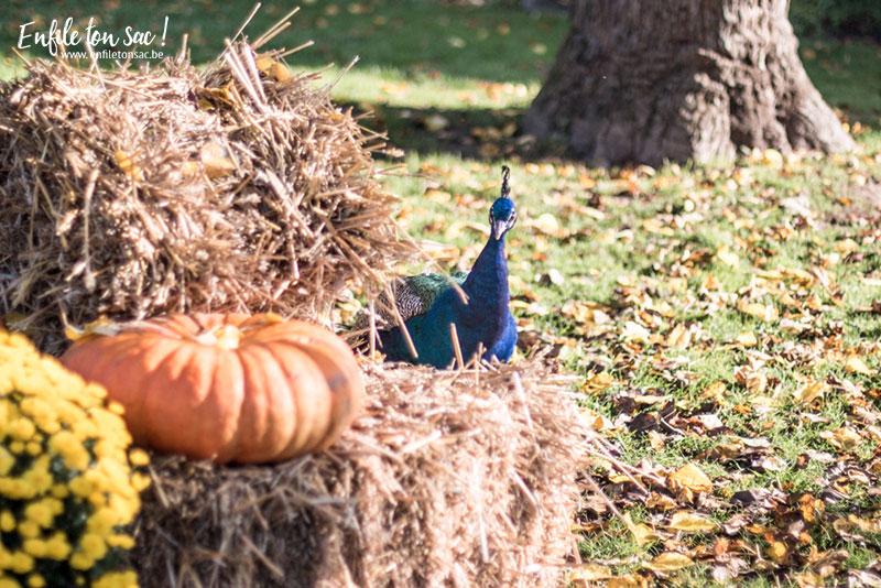 pairidaiza halloween decorations Halloween à Pairi Daiza   dates et informations 2016