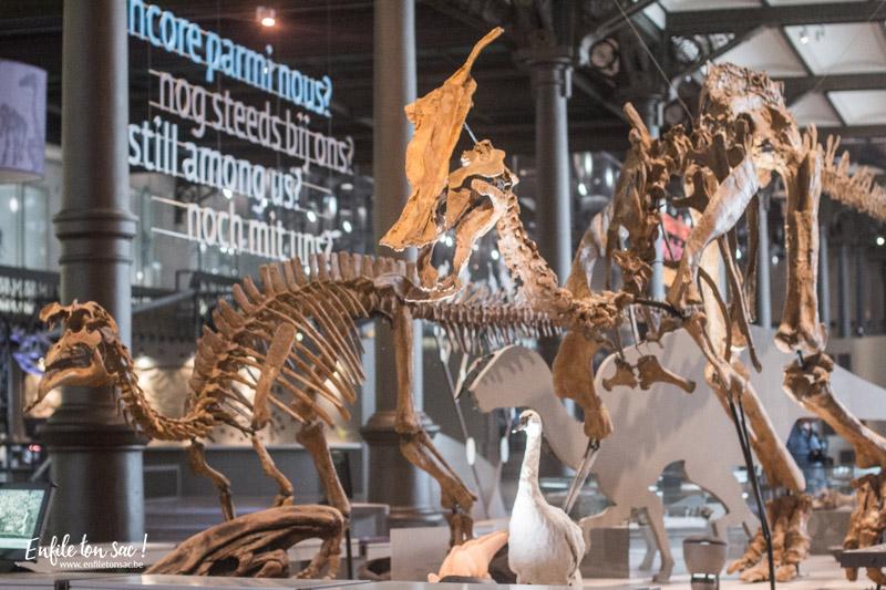bruxelles sciences naturelles 2 Un week end à Bruxelles – A ne pas manquer en 2017.