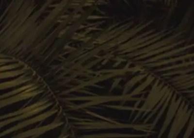 Palm Sunday Prayerpoem