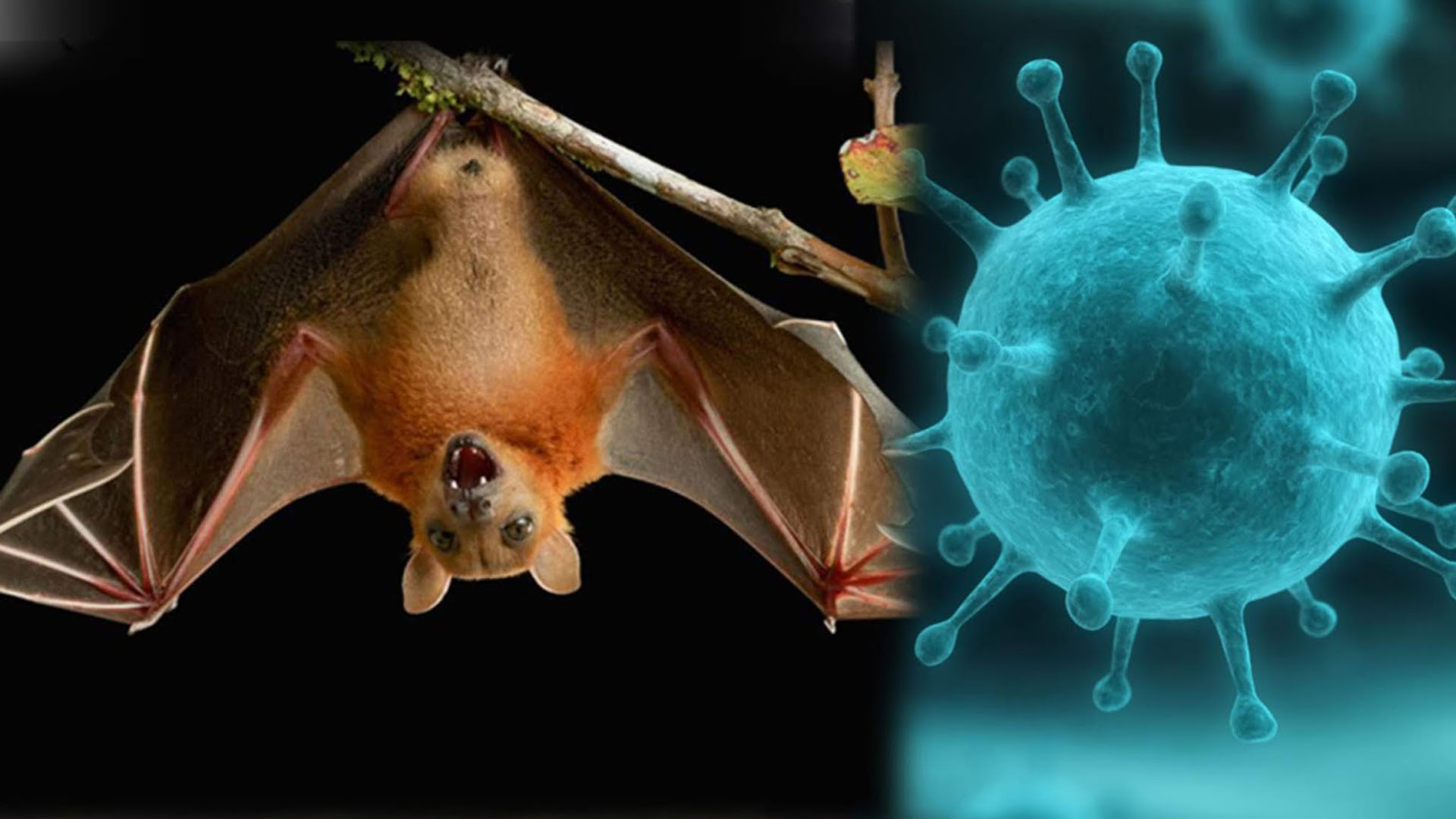 Surge rebrote del MORTAL VIRUS Nipah o VNi, en la India - Enfoque ...
