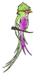 A quetzal bird with glasses, the logo of Enfoque Ixcan