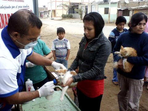 Perros y gatos vacunados y desparasitados (1)