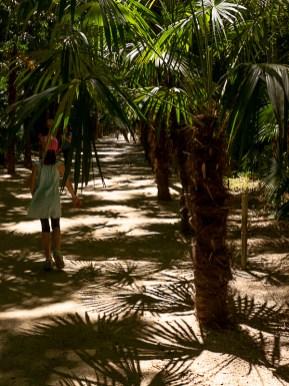allée de palmiers dans la bambouseraie d'Anduze