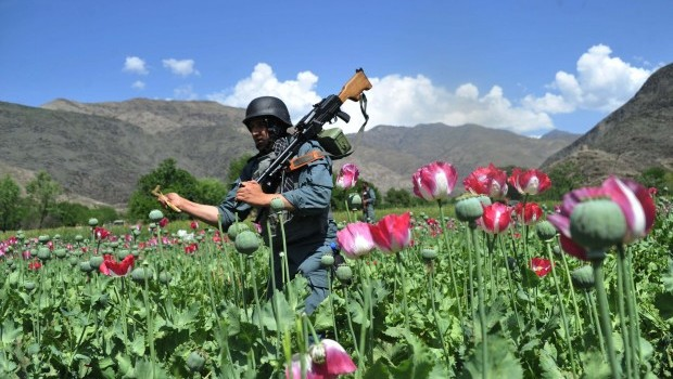 Afghan Opium Cultivation to Rise in 2013, Says UN Report