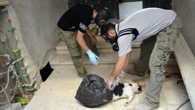 Médecins sans Frontières: Thousands suffering neurotoxic symptoms in Syria