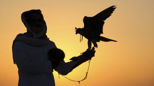For falconers, Mujairema is best