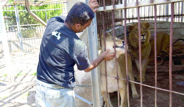 Gaza's zoos: Green retreats reduced to ashes