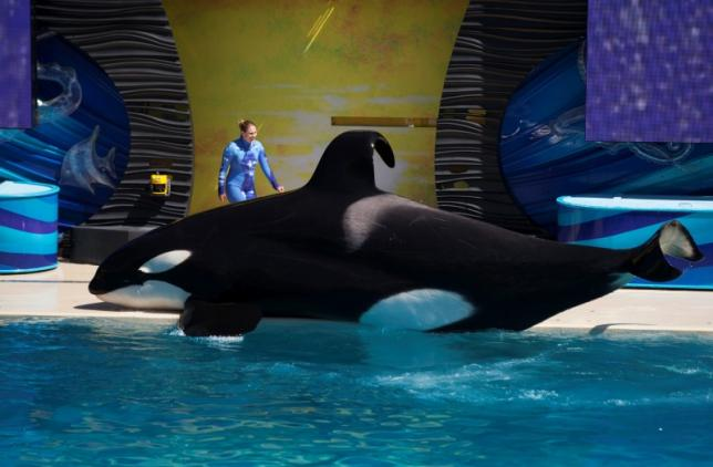 By the Help of 'Blackfish' SeaWorld's Killer Whale Programs are Over
