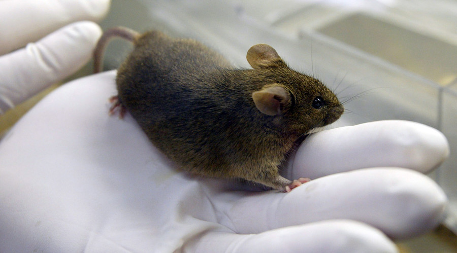 Study: Gene Therapy Allows Deaf Mice to Hear