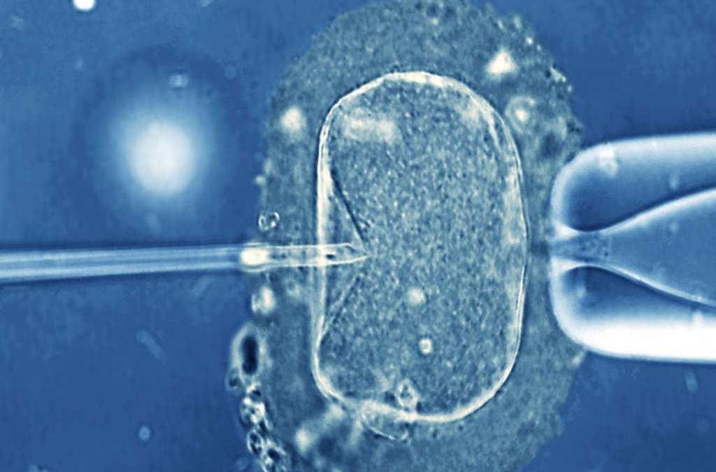 Failed IVF Linked to Heart Diseases, Study Says