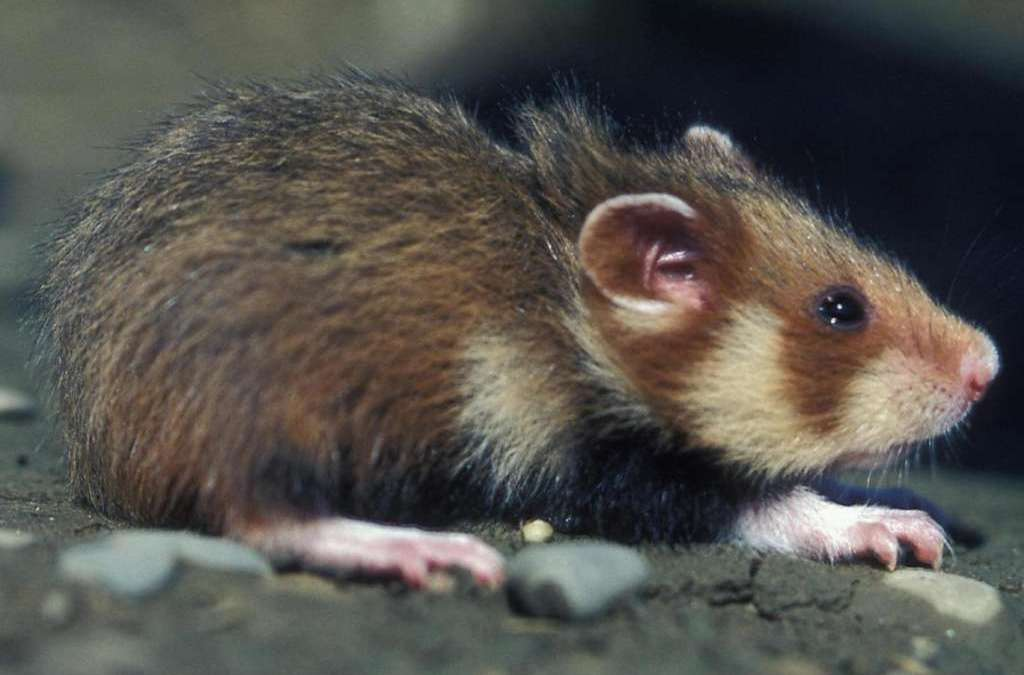 Russian Scientists Discover 145-Million-Year Old Species of Rodents