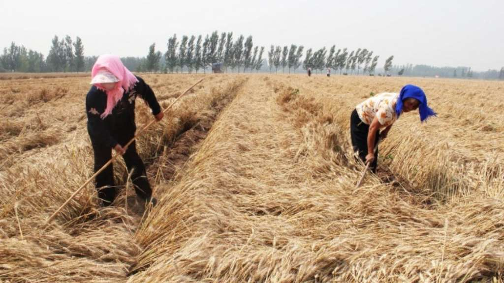 FAO Forecasts 7 Million Tons of Morocco Wheat Harvest in 2017
