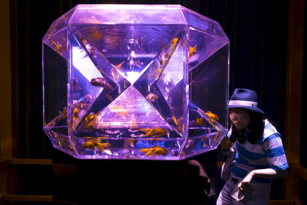 Goldfish, Bright Lights in Tokyo Special Exhibition