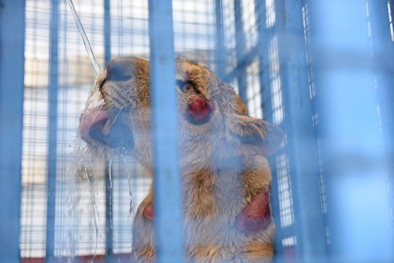Vets Help Animals Rescued from Syria Zoo