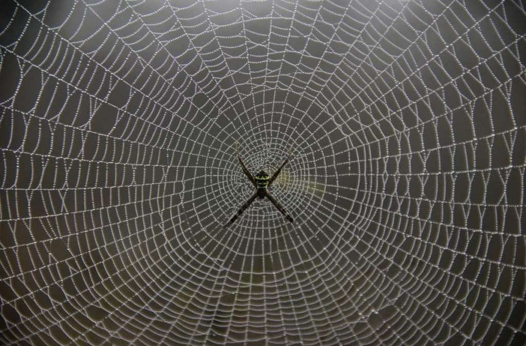 Spider Silk…Several Usages Including Reformation of Heart Tissues