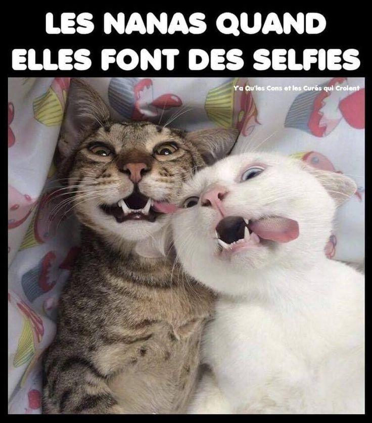 Humour Blague Citation Image Drole Facebook