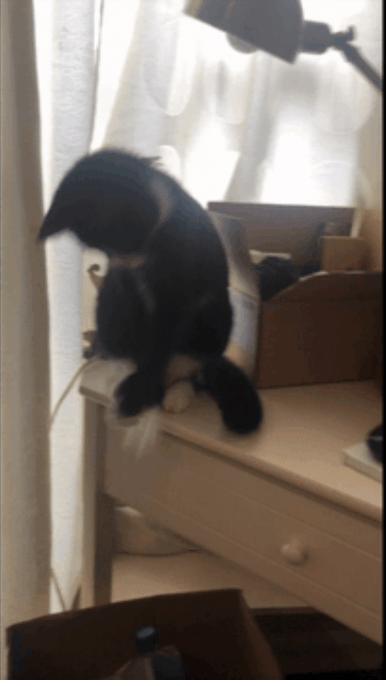 Kathy: Cooperative Cat