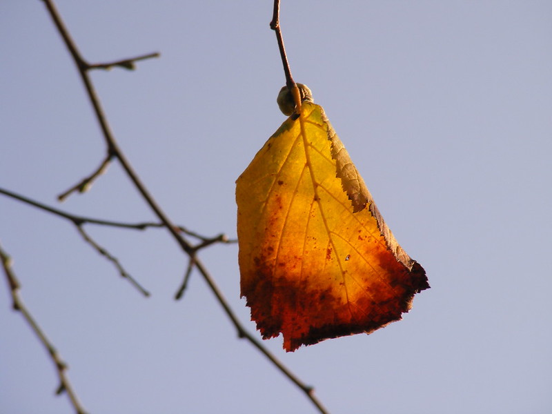 A falling leaf that resembles a needed change