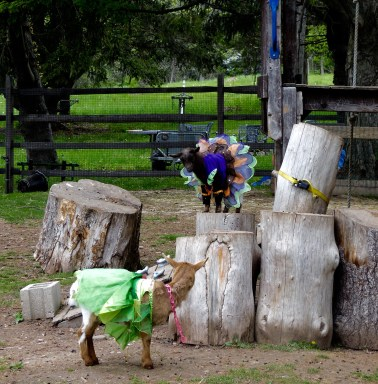 Goats Playing in Costume