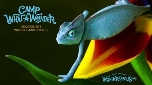 WonderCard-chameleon
