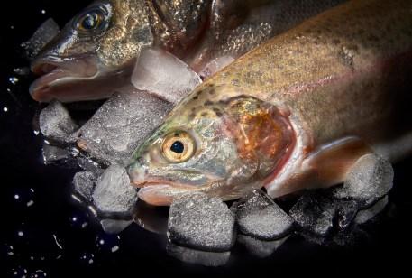 Wet Fish