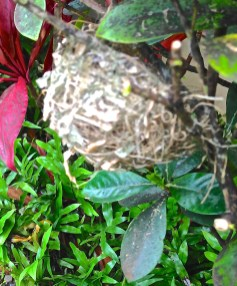 I found this nest in the garden. An extra blessing!