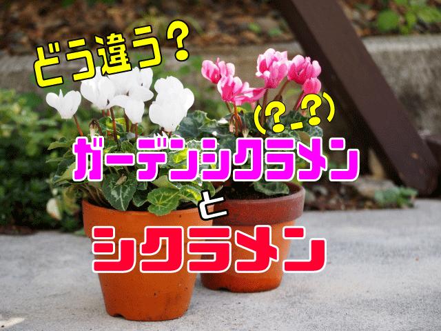 ガーデンシクラメン表紙
