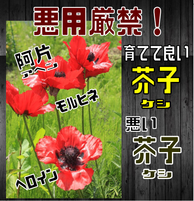 ケシ-(表紙)