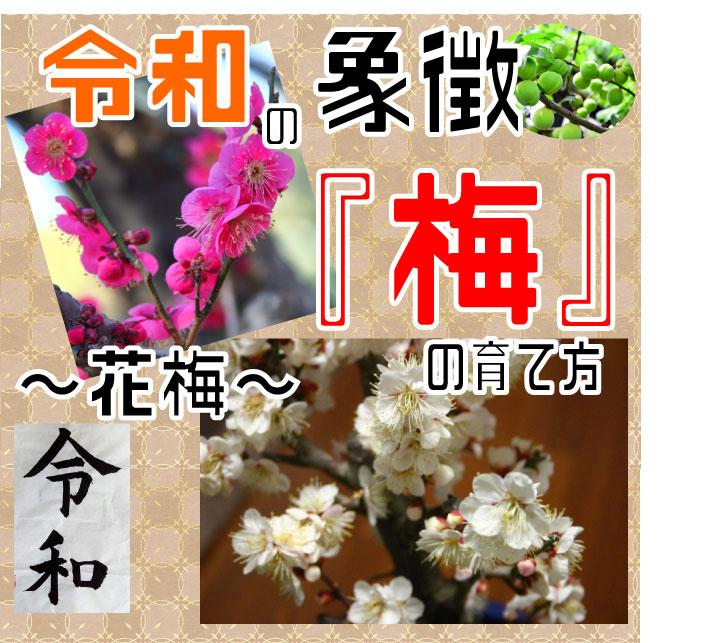 梅表紙03