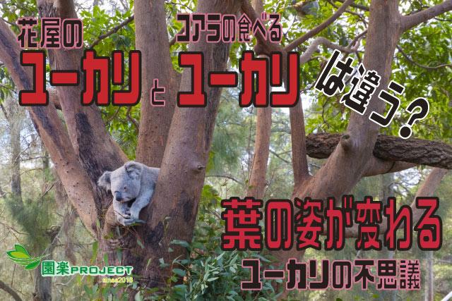 ユーカリ2表紙