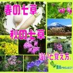 春秋の七草比較表紙