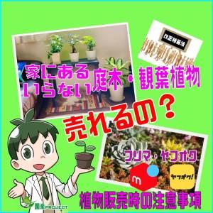 売れる植物表紙