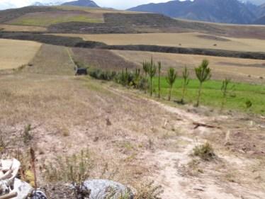 Uebstbeem guffen ugeplanzt fir d'Erosioun ze bremsen an Uebst ze liweren