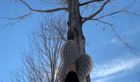 Kane Revive Shoe