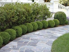 √ Classic Boxwood Edged Pathway 2019 _frontyard _landscapingideas _homeoutdoor _housedesign _chichke