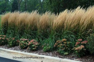 Best pictures_ images and photos about front yard landscaping ideas with perennials _homedecor _gar (1)