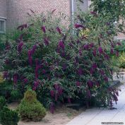 Best pictures_ images and photos about front yard landscaping ideas with perennials _homedecor _gar (30)