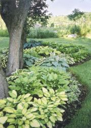 Best pictures_ images and photos about front yard landscaping ideas with perennials _homedecor _gar (39)