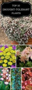 Best pictures_ images and photos about front yard landscaping ideas with perennials _homedecor _gar (42)