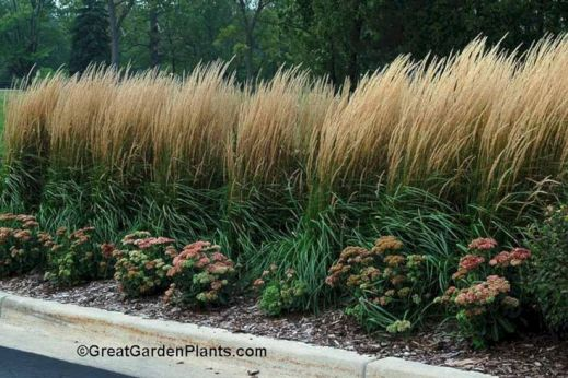 Best pictures_ images and photos about full sun front yard landscaping ideas _homedecor _gardendec (11)