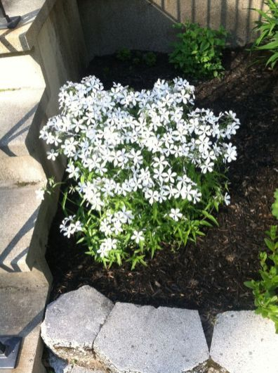 Best pictures_ images and photos about full sun front yard landscaping ideas _homedecor _gardendec (6)