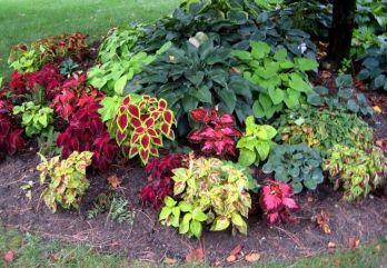 Coleus and Hosta flower Beds 2019 _frontyardlandscaping _landscapingideas _flowerbeds _flowergarden