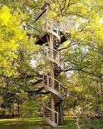 Did you ever have a Treehouse_ _ Susan Gabriel_ Author