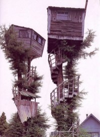 Epic tree houses. I imagine they are opposing fortresses in the battle over which side of toast should be buttere