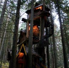 Fairytale Tree Houses _ The _Enchanted Forest_ Wooden Tree House is Truly Overwhelming (GALLERY)