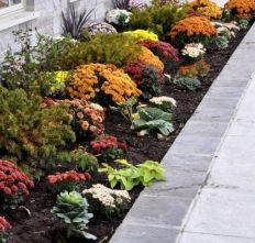 Flashy Fall Flowers 2019 _flowergarden _landscapingideas _homeoutdoor _frontyardlandscaping