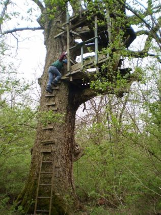 Great Tree House Ideas Trends For 2018 _ Easy to Build 2019 _treehouse _backyarideas _outdoorliving
