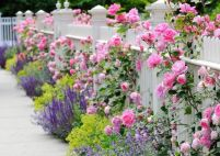 Heavenly Picket Fence _frontyard _landscapingideas _floweragarden _gardenfence _apartmentdecorating